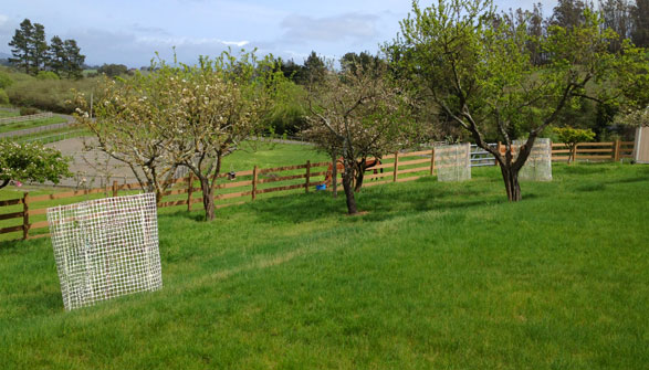 Plenty of apple trees to keep your horse happy!